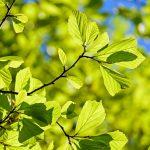 OPORTUNIDADE DE EMPREGO: Técnico Superior – Gestão de espaços verdes (m/f)