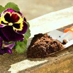 Características de um bom substrato: conheça as principais