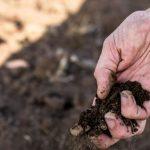 Agricultores pedem apoios do Governo para mitigar falta de alimentação animal