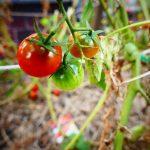 A agricultura biológica na Europa: um retrato