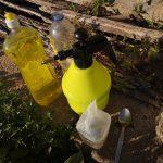 VÍDEO DA SEMANA: Como combater pulgões e cochonilhas usando detergente da louça