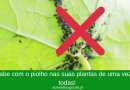 Receitas caseiras e naturais para eliminar o piolho da sua horta!
