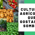 VÍDEO DA SEMANA: Descubra quais as culturas agrícolas que gostam de sombra