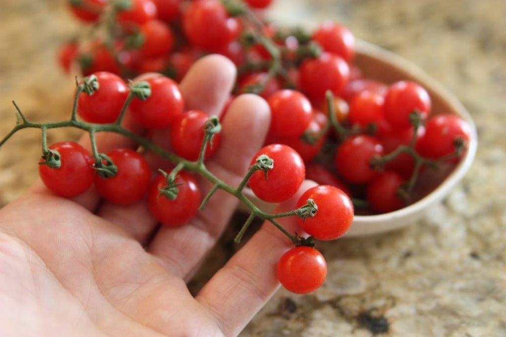 tomate-cereja como plantar e cuidar