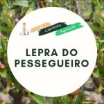 Avisos Agrícolas: Como tratar a lepra do pessegueiro