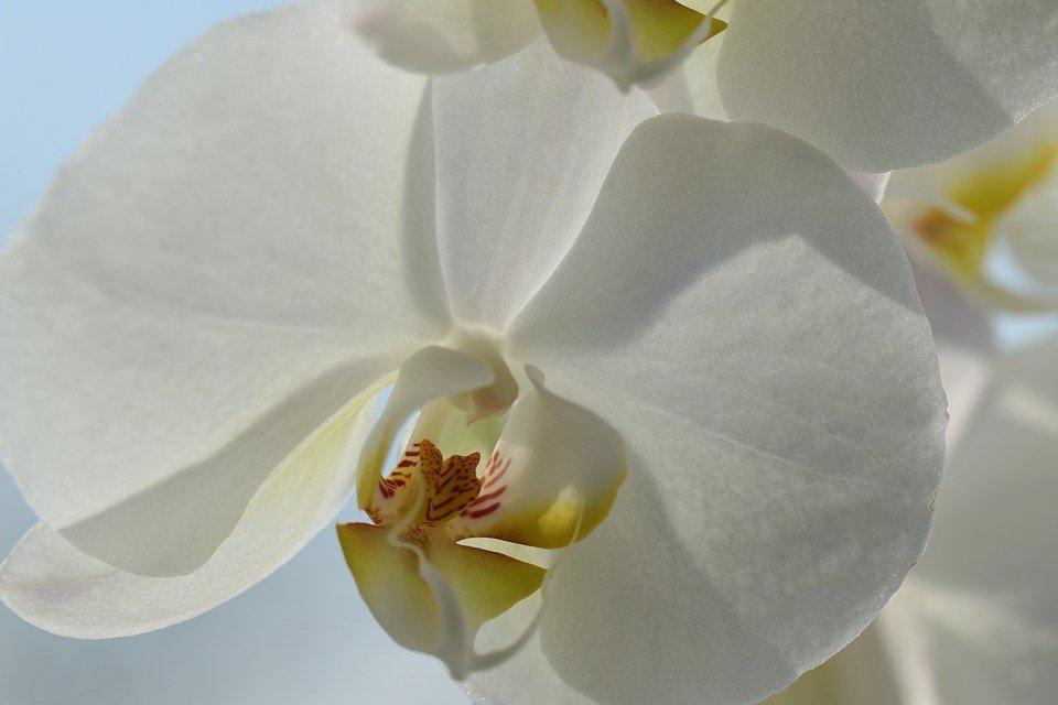 como reenvasar orquídeas
