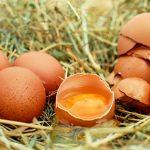 Como usar cascas de ovo para fazer um adubo para as suas plantas