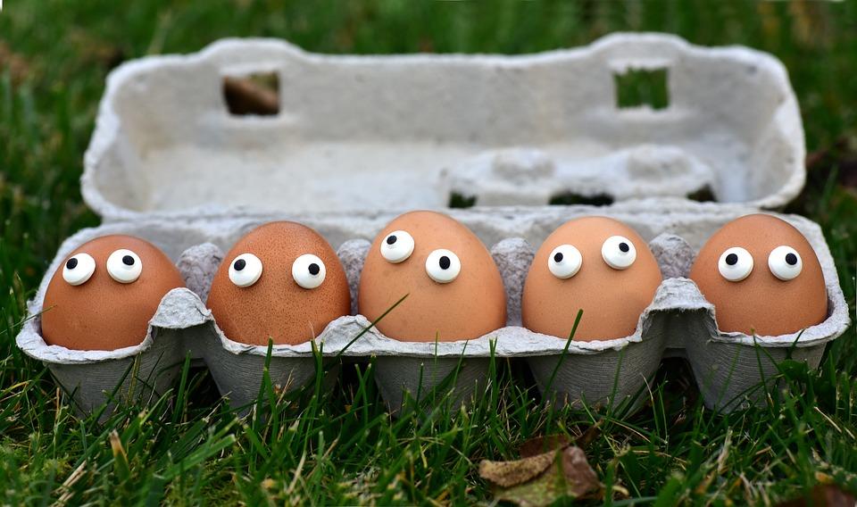 adubo com cascas de ovo