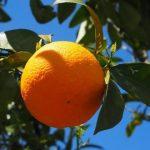 PDR 2020 tem 7,5 milhões de euros para apoio à fruticultura