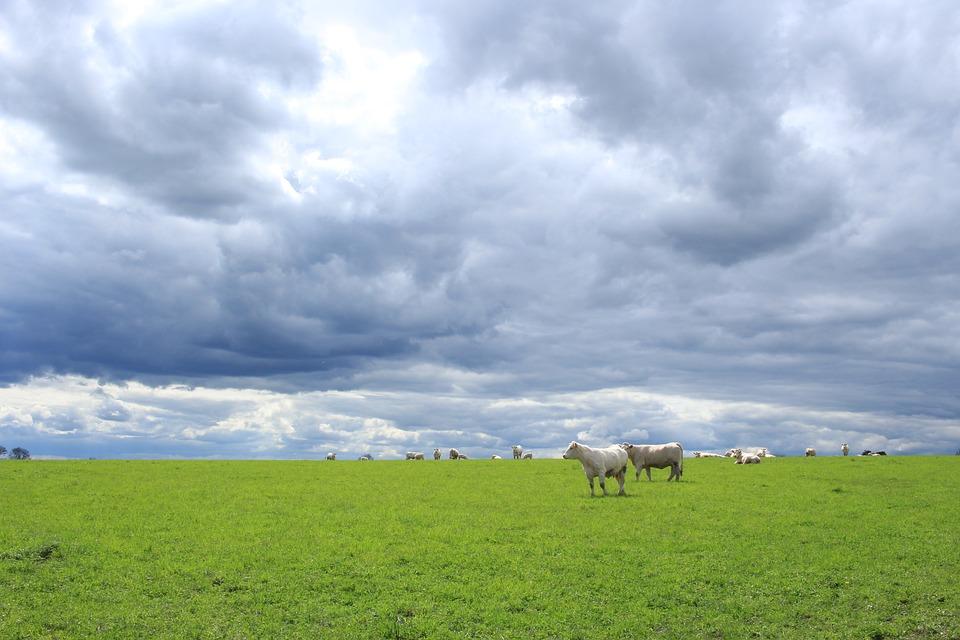IVA na agricultura