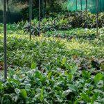 OPORTUNIDADE: Admite-se Técnico de Produção de Plantas Hortícolas em Viveiro (m/f)