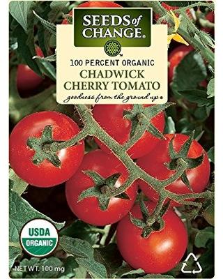 tomate -cereja como plantar
