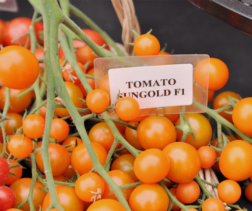 tomate-cereja em vaso