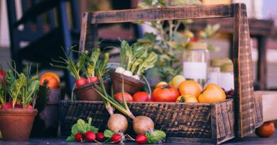 OPORTUNIDADE: Colaboradores para a Apanha da Fruta (M\F)