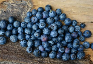 """Mirtilo: o """"Rei dos Antioxidantes"""" e o """"Fruto da Juventude"""""""