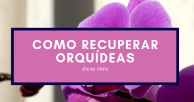 A minha orquídea está a morrer: o que é que devo fazer?