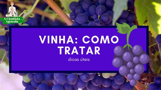 Principais pragas e doenças na vinha: quais são e como tratar