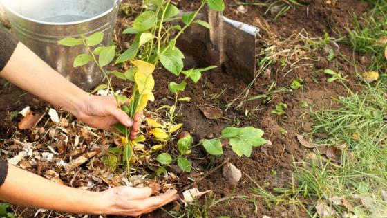 como proteger as suas plantas/culturas do vento e da geada