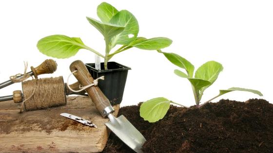 ideias para plantar couves