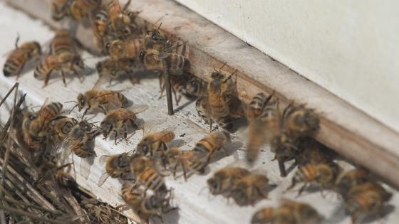 como fazer criação de abelhas