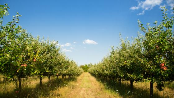 pomar árvores de fruto