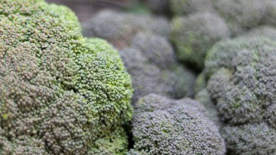 como cultivar brócolos