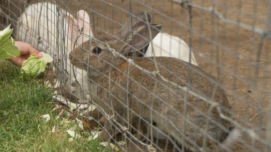 como fazer criação de coelhos