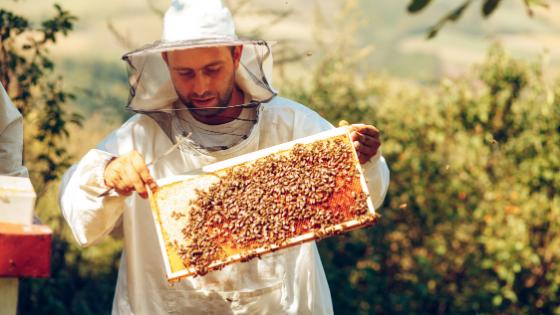 como criar abelhas