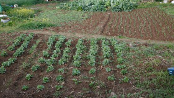 como ter uma horta ecológica