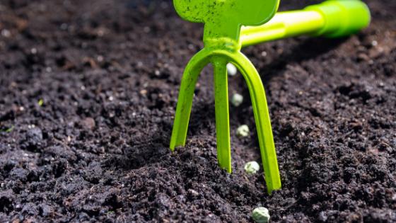 quando semear ervilhas