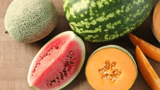 como cultivar melão