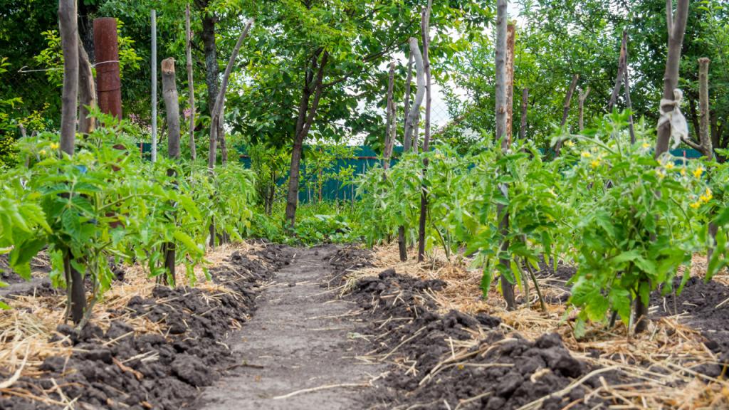permacultura como começar