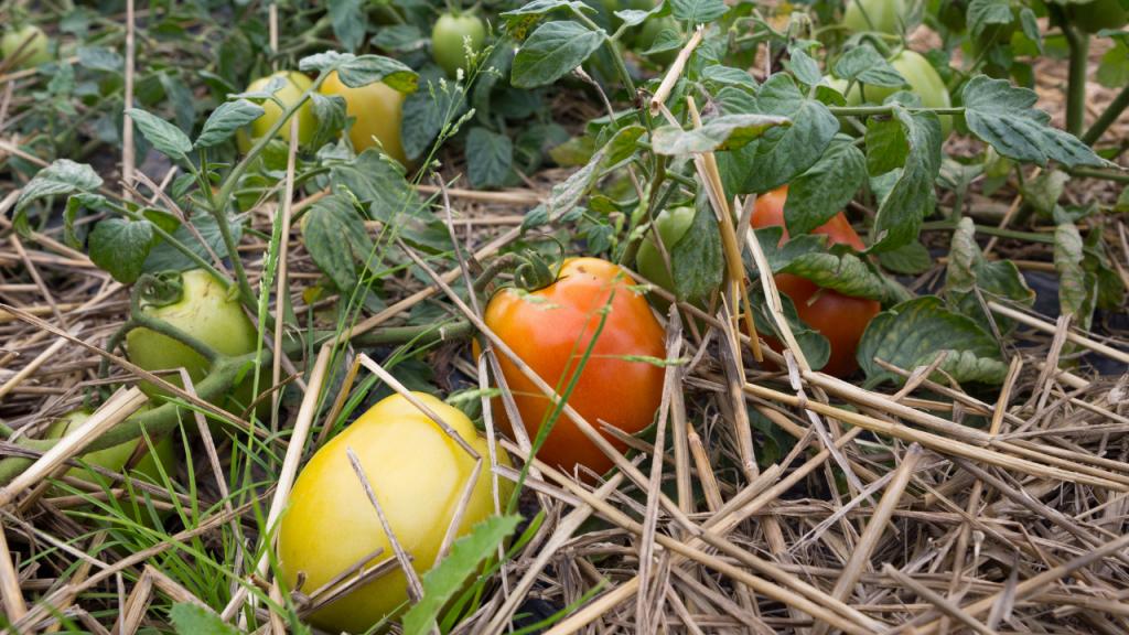 plantas permacultura