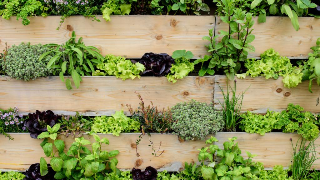 o que plantar em hortas verticais